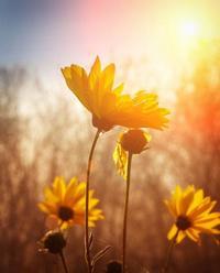 Полевые цветы на рассвете 56