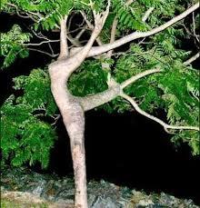 Скачать Песню Я Такое Дерево