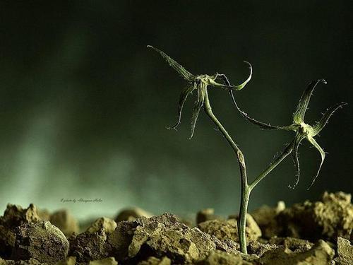 %D0%B0%D0%BB%D0%BC%D0%B0%D0%B7%D0%BE%D0%B2%D0%B0594028150 n thumb Украинка создаёт волшебные миры из отживших растений (фото)