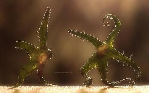 %D0%B0%D0%BB%D0%BC%D0%B0%D0%B7%D0%BE%D0%B2%D0%B07760856592 n thumb1 Украинка создаёт волшебные миры из отживших растений (фото)